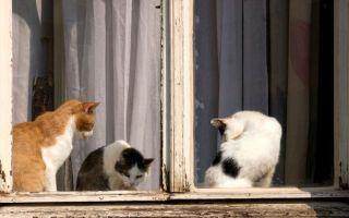 Что делать, если из квартиры соседей воняет, неприятный запах кошачей мочи, краски и т. п., как бороться и куда жаловаться