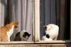 От соседей воняет кошками