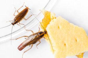 Соседские тараканы.